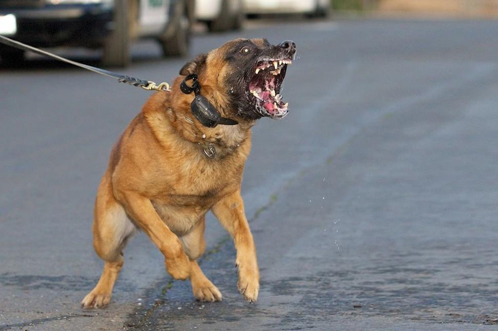 veszélyes kutya   uh.ro
