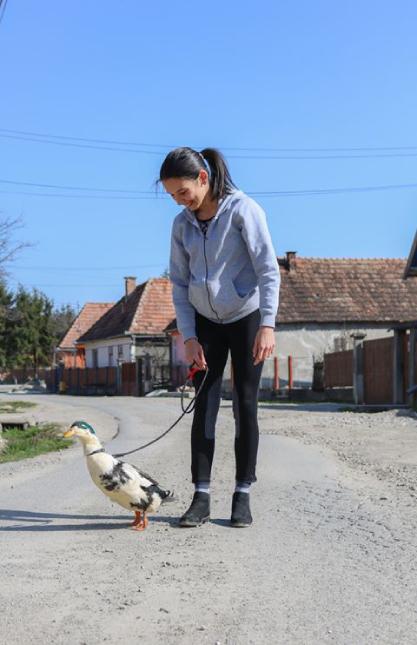 sétáló kacsa koronavírus háziállat
